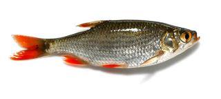 Fishsmall
